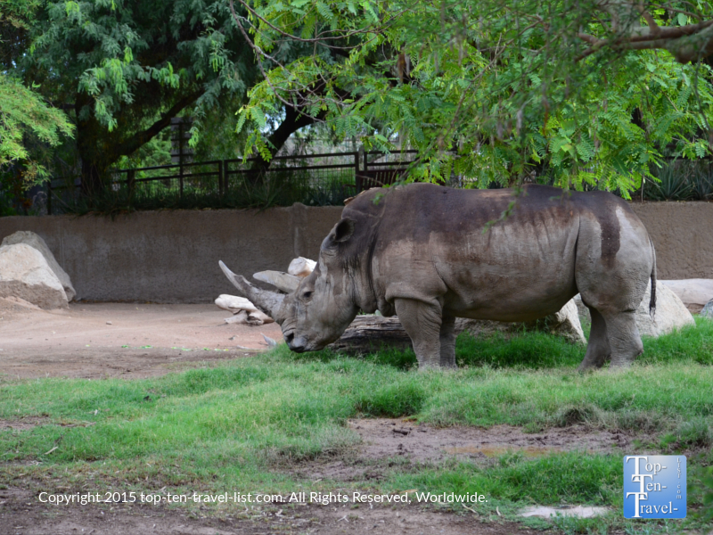 Rhino at the Phoenix Zoo