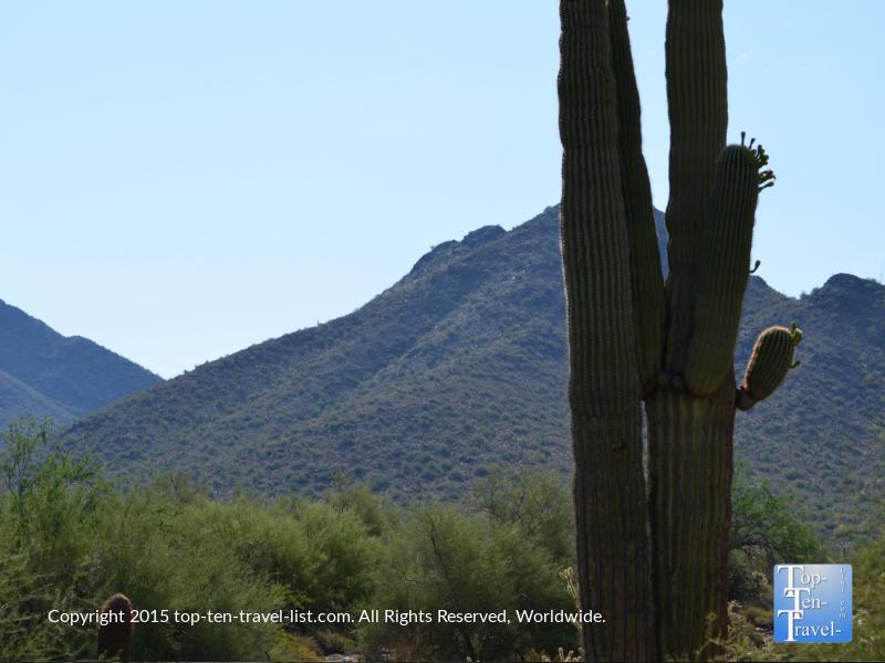 Cactus on the Horsehoe loop trail at McDowell Sonoran Preserve in Scottsdale, Arizona