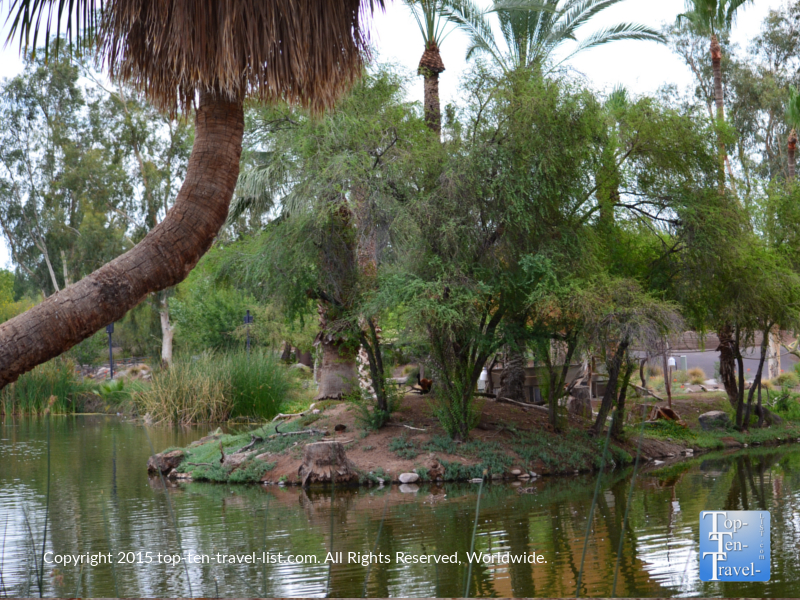 Palm trees and water views at the Phoenix Zoo