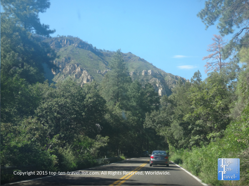 You will get to enjoy many varieties of trees as you make your way to Sedona.