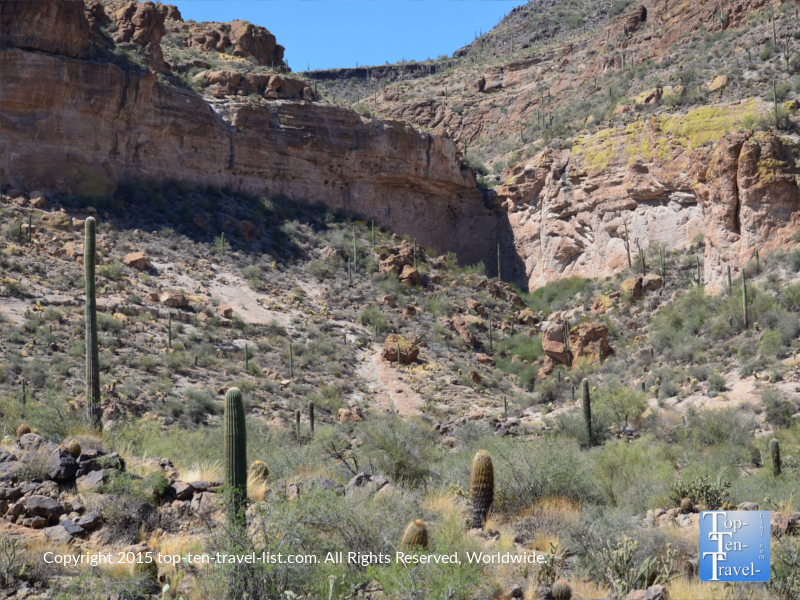 Lots of beautiful cactuses seen on the Dolly Steamboat cruise in Southern Arizona
