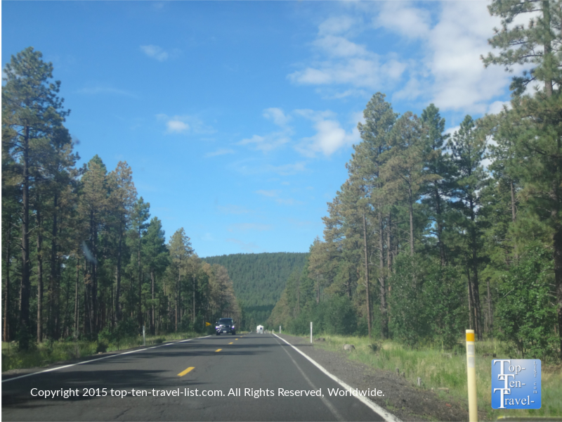 Beautiful ponderosa pines as you start the scenic Oak Creek Canyon drive.