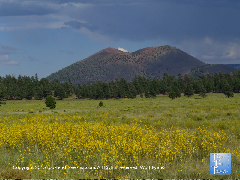 A view of Sunset Crater from Bonito Meadow. Look at the beautiful wildflowers!
