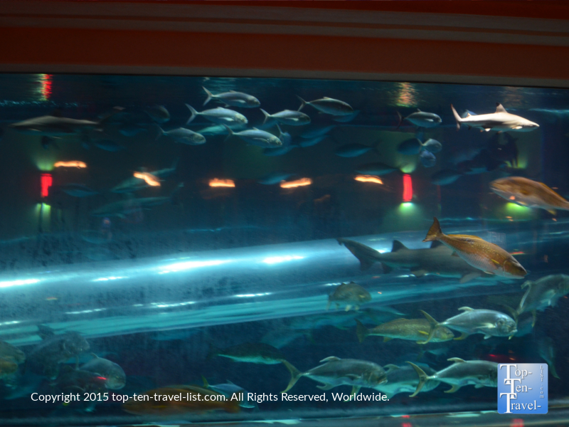 The shark tank waterslide at the Golden Nugget on Fremont Street in Las Vegas, Nevada