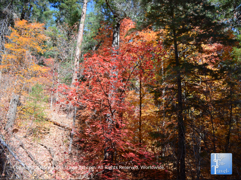 A great medley of fall foliage along the West Fork hiking trail in Oak Creek Canyon