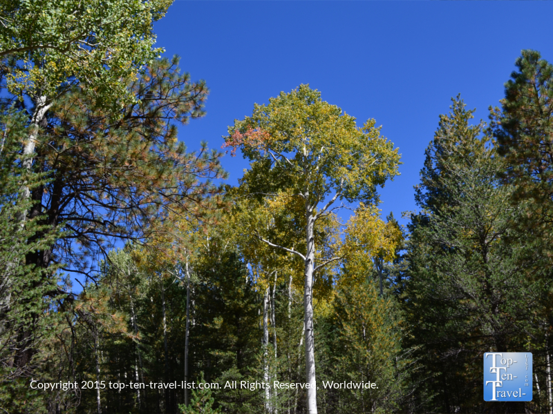 A hint of fall colors along the Bismark lake trail in Flagstaff