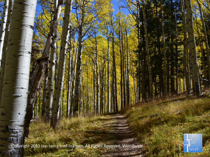 Magnificent fall colors along the Inner Basin trail in Flagstaff, Arizona