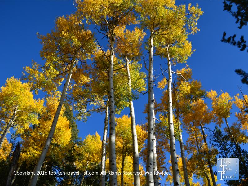 Fall foliage on the Kachina trail in Flagstaff, Arizona