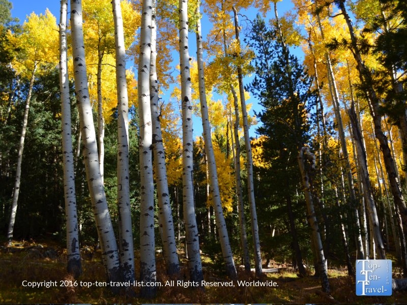 Fall foliage along the Kachina Trail in Flagstaff, Arizona