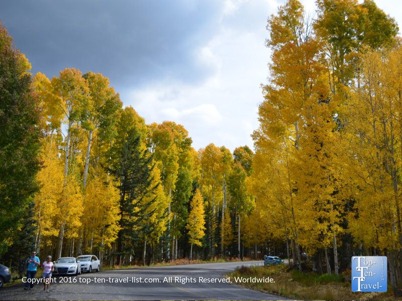 Amazing fall foliage on Snowbowl Rd in Flagstaff, Arizona