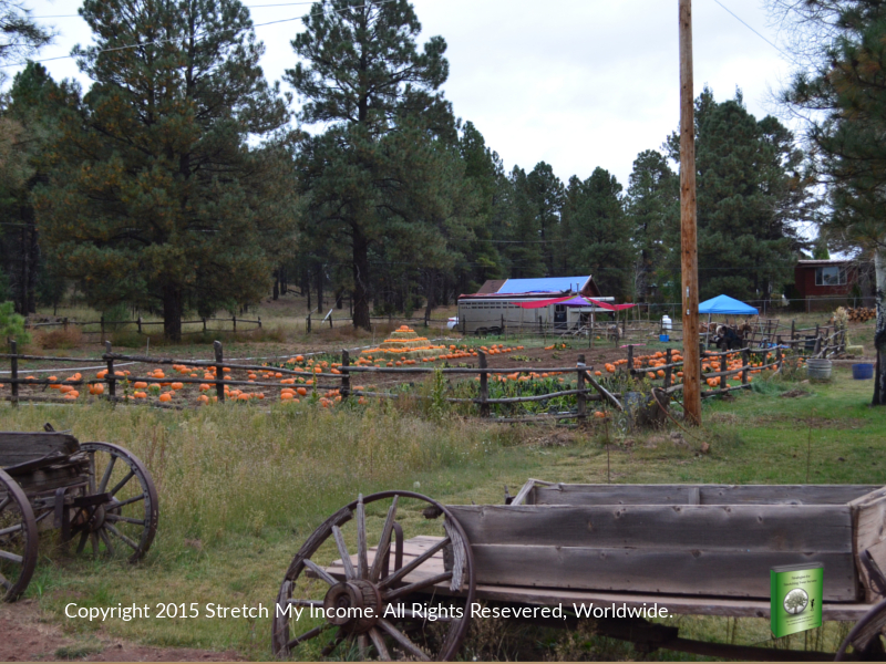 The annual Pumpkin in the Pines event at Hitchin' Post Stables offers the area's best pumpkin patch.