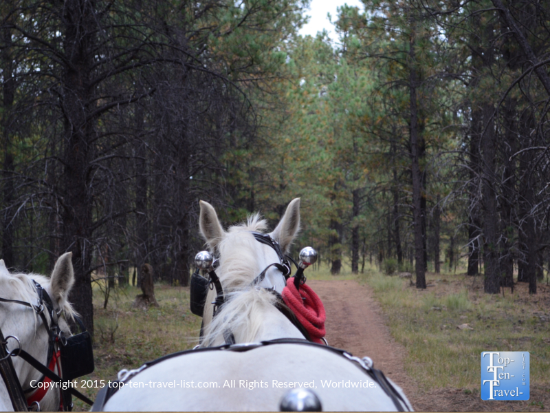 Hayride through ponderosa at Hitchin Post Stables in Flagstaff, Arizona
