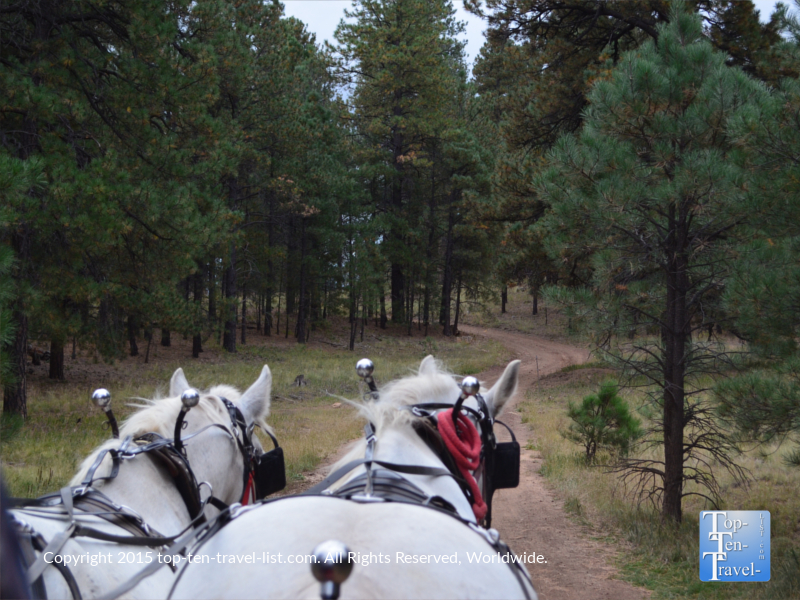 Pretty ponderosa views from hayride at Hitchin Post Stables in Flagstaff, Arizona