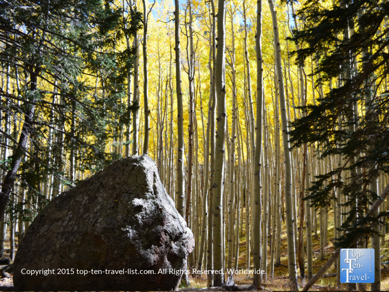 Flagstaff's colorful Inner Basin Trail during the fall season