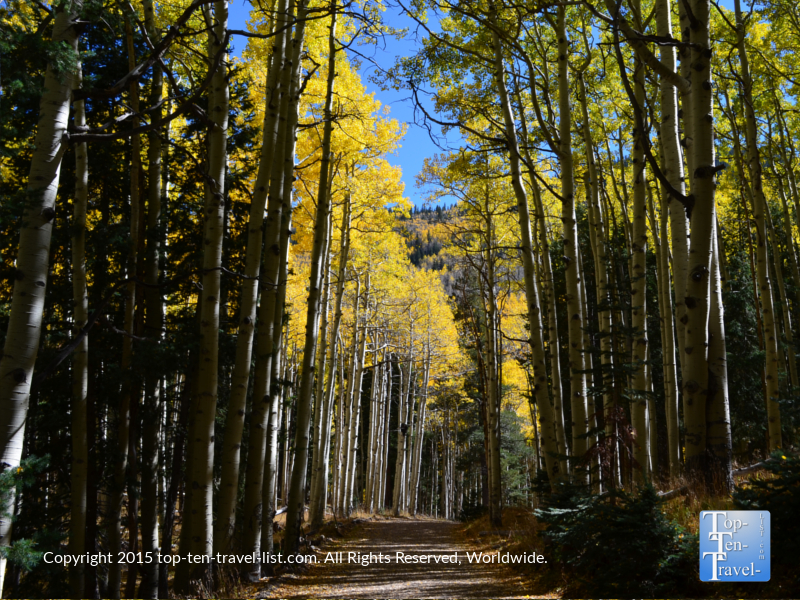 A fall stroll along the colorful Inner Basin trail in Flagstaff, Arizona