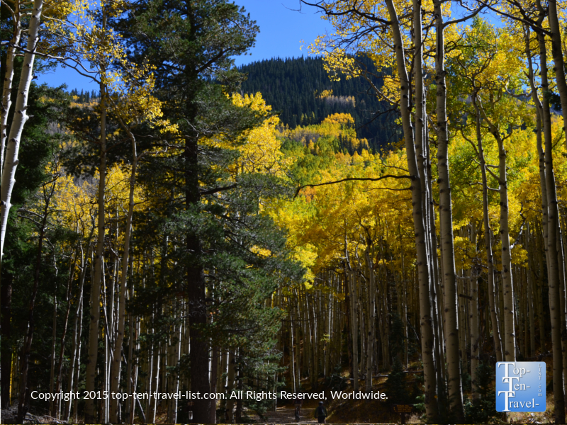 Colorful aspens and great mountain views along the Inner Basin Trail in Flagstaff, Arizona