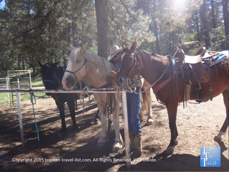 The 3 horses used for a trail ride at Diamond Hitch Stables in Pagosa Springs, Colorado