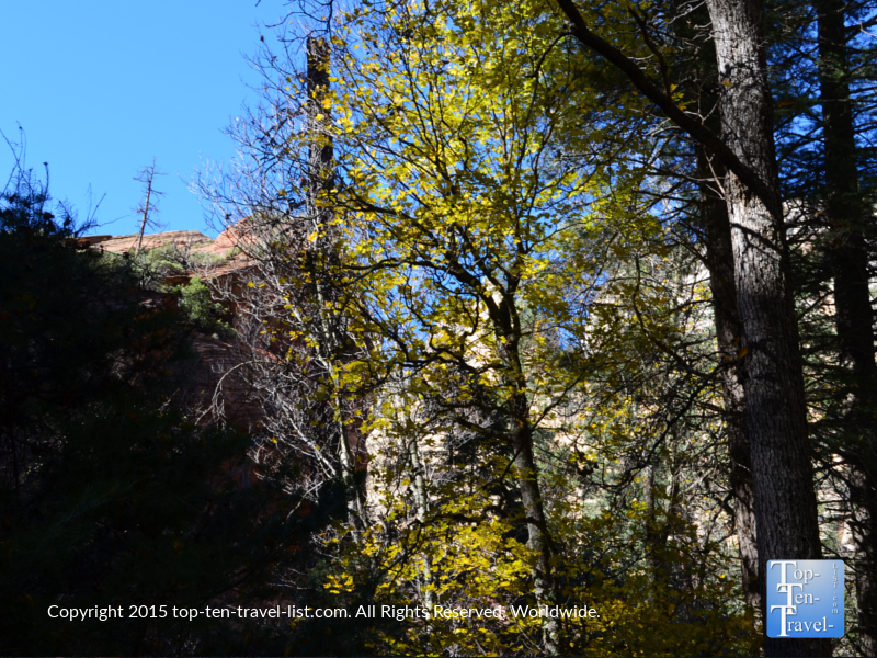 A bit of yellow foliage along the scenic West Fork hiking trail in Sedona, Arizona