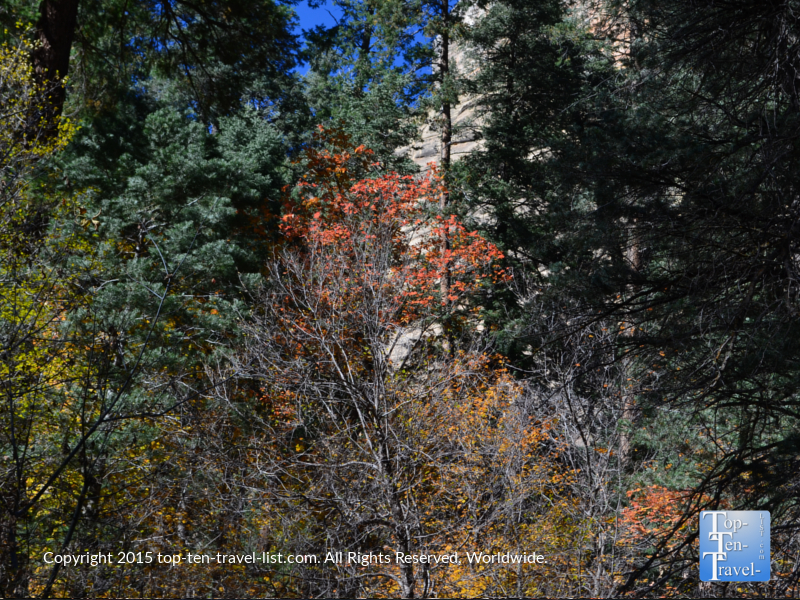 A variety of beautiful fall colors along the scenic West Fork hiking trail in Sedona, Arizona