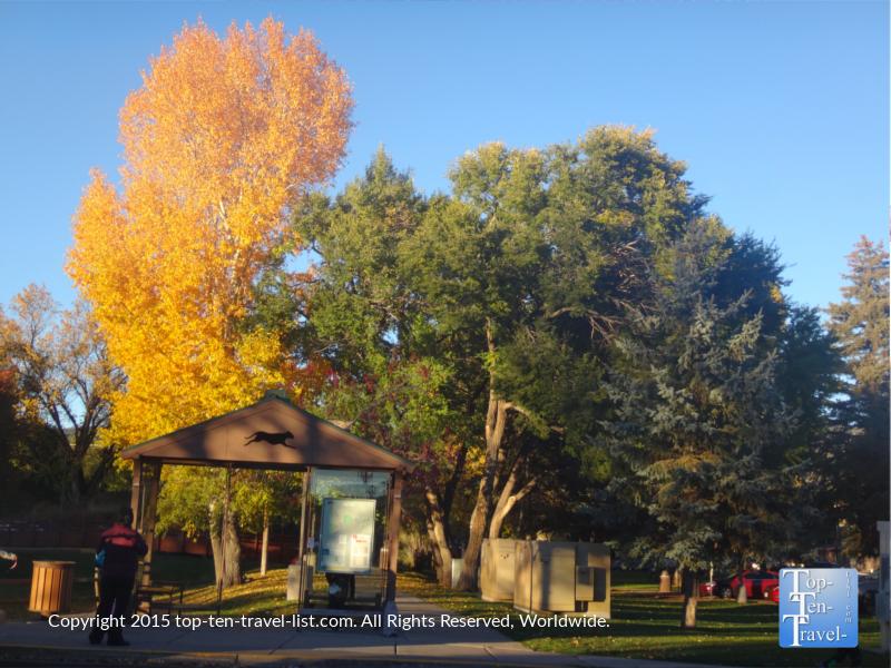 Bright yellow foliage near the Flagstaff Public Library.