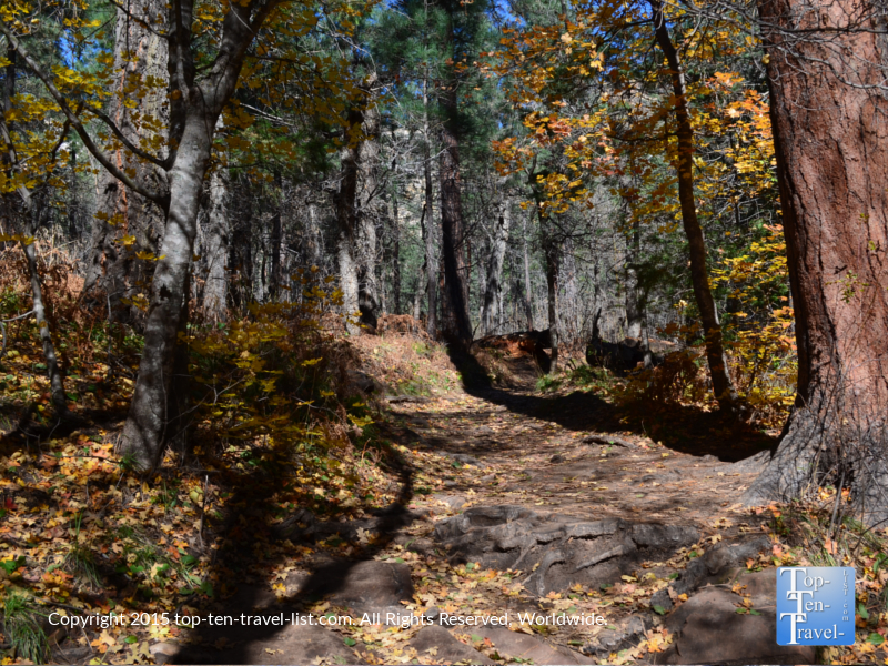 Fall leaves covering the West Fork hiking trail in Sedona, Arizona