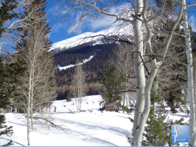aspens-and-mountain-views-along-the-aspen-nature-loop-in-flagstaff