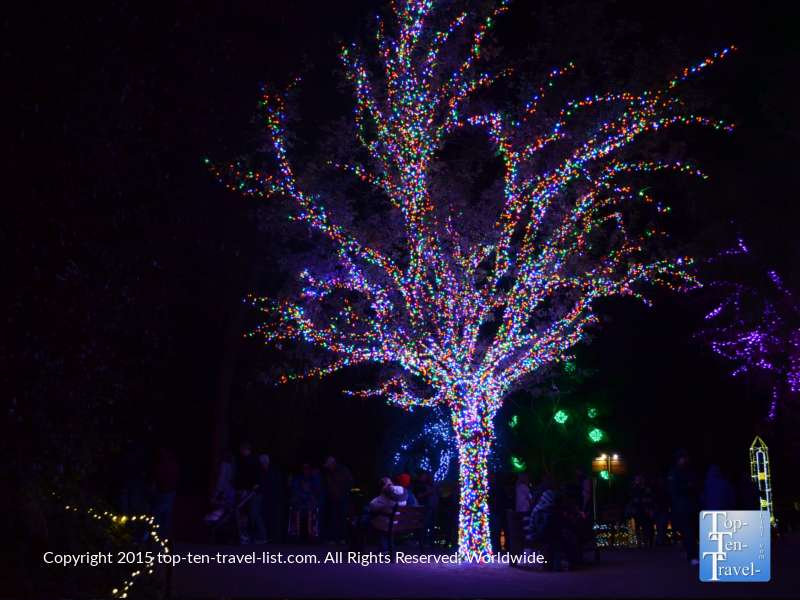 Colorful lights at the Phoenix Zoo Lights