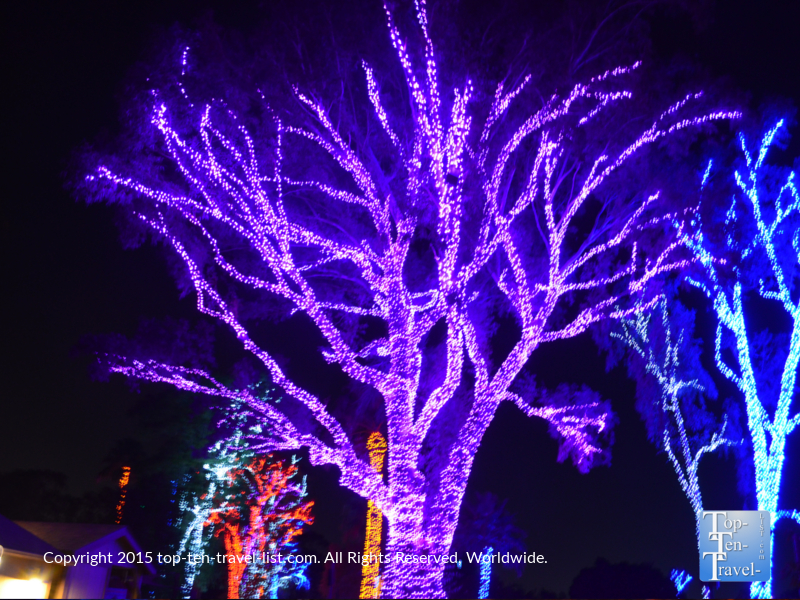 Colorful trees at the Phoenix Zoo Lights