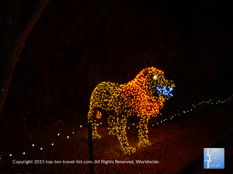 Lion display at the Phoenix Zoo Lights