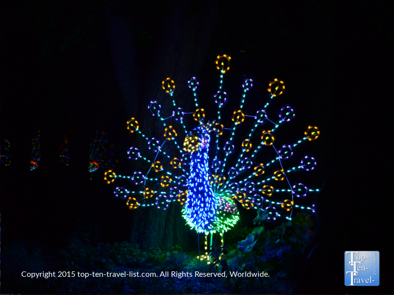 Peacock light display at the Phoenix Zoo