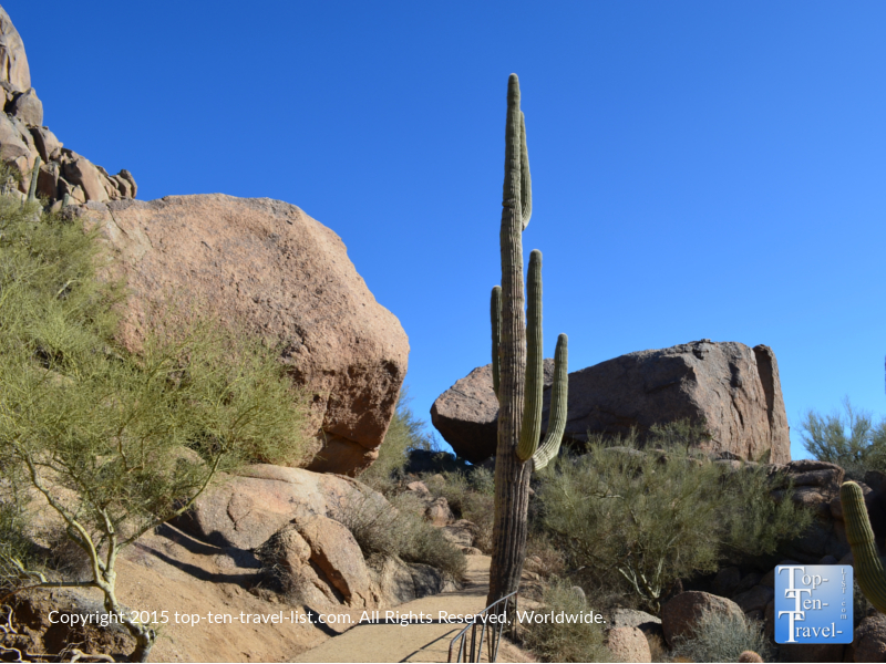 A very tall cactus lining the Pinnacle Peak Trail in Scottsdale, Arizona