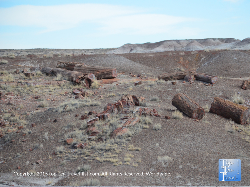 Crystal Forest holds the highest concentration of petrified wood at the Petrified National Forest