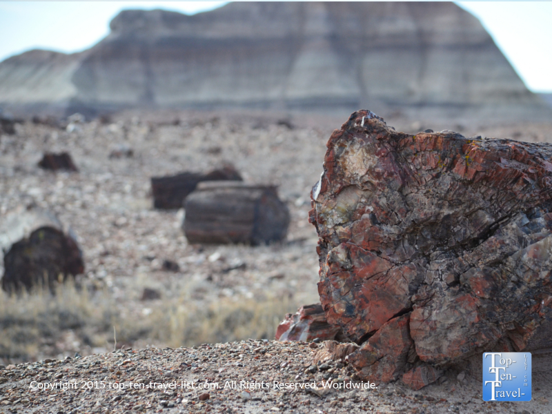 A piece of petrified wood at Crystal Forest at the Petrified National Forest