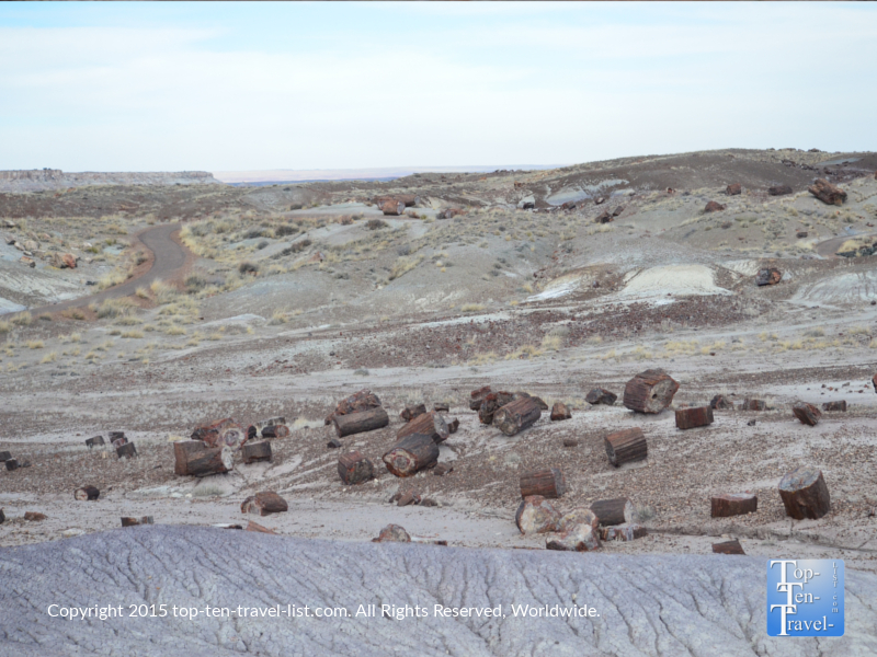 The massive collection of petrified wood at Crystal Forest in the Petrified National Forest