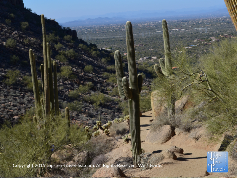 Walking along the cactus lined Pinnacle Peak Trail in Scottsdale