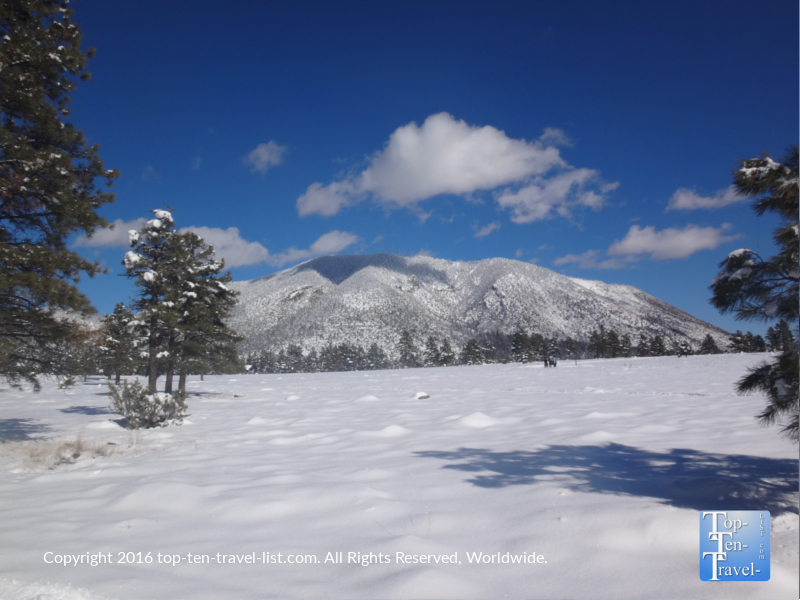 Gorgeous views after a winter snowstorm at Buffalo Park in Flagstaff, Arizona