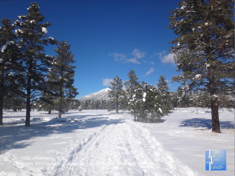 A winter snowshoeing adventure around Buffalo Park in Flagstaff, Arizona