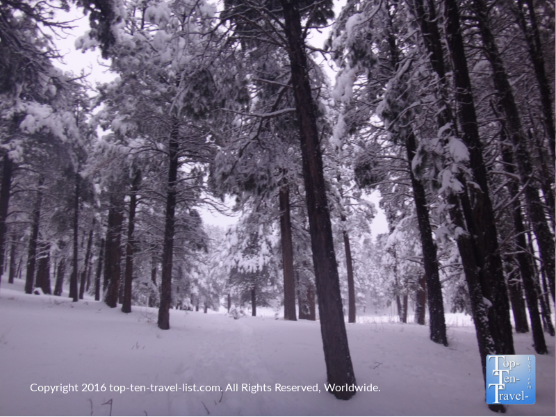 A winter walk through snowy Kachina Village near Flagstaff Arizona