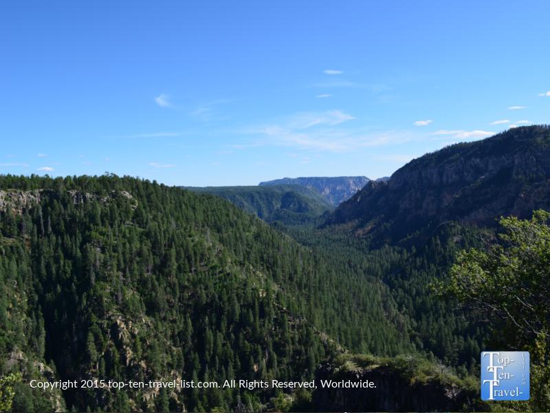 Pretty forested pine views along Oak Creek Canyon Drive in Northern Arizona