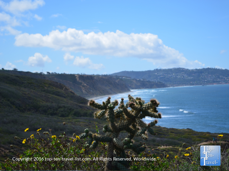Beautiful cactus and ocean views at Torrey Pines Nature Reserve in La Jolla CA