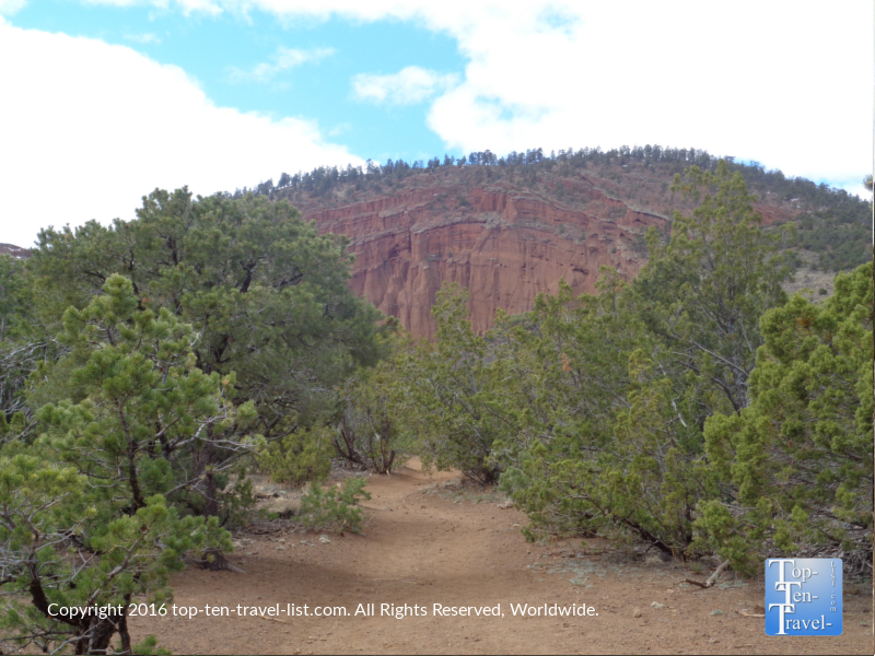 Gorgeous scenery on the Red Mountain trail in Flagstaff