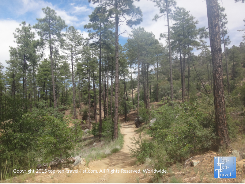 Strolling through a ponderosa pine forest on Thumb Butte trail in Prescott, Arizona