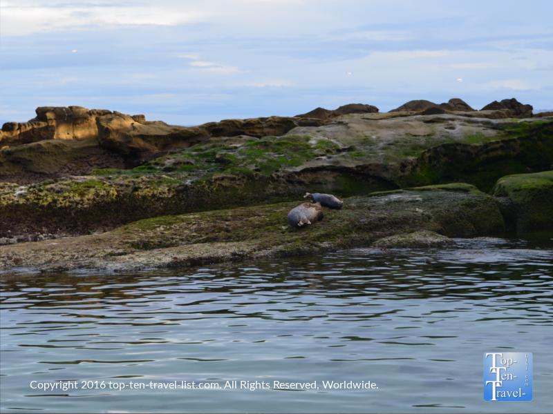 2 sea lions at La Jolla Cove in San Diego