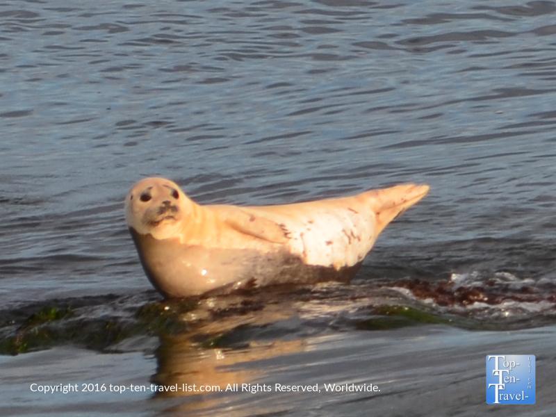 Cute sea lion at La Jolla Cove in San Diego