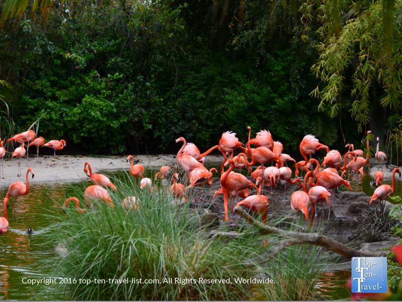 Flamingos at the San Diego Zoo