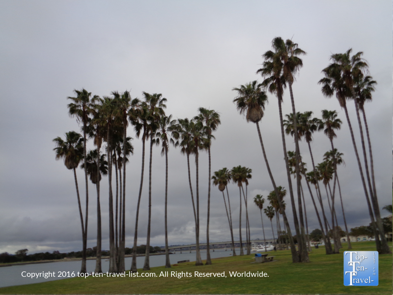 Lots of palms along the Mission Bay bike path in San Diego CA