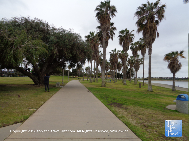 Lots of pretty palms lining the Mission Bay bike path in San Diego