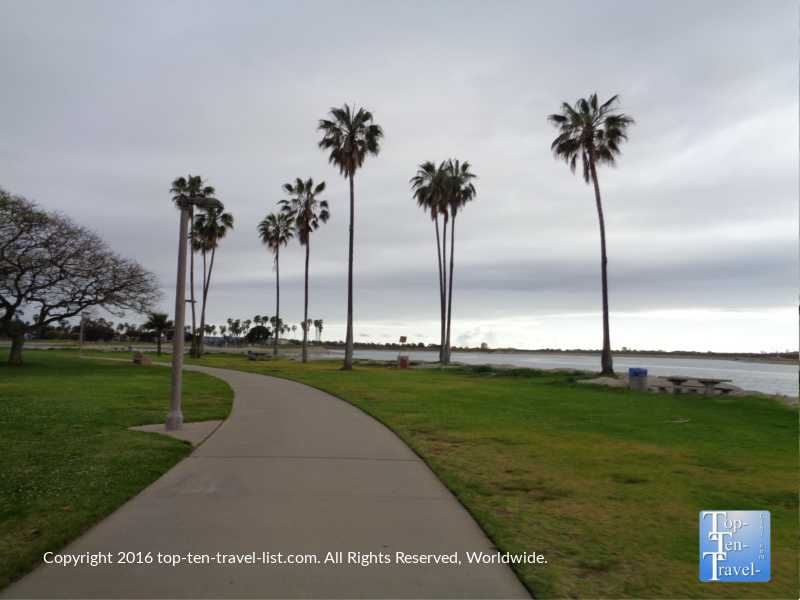 Palm trees along the Mission Bay bike path in San Diego CA