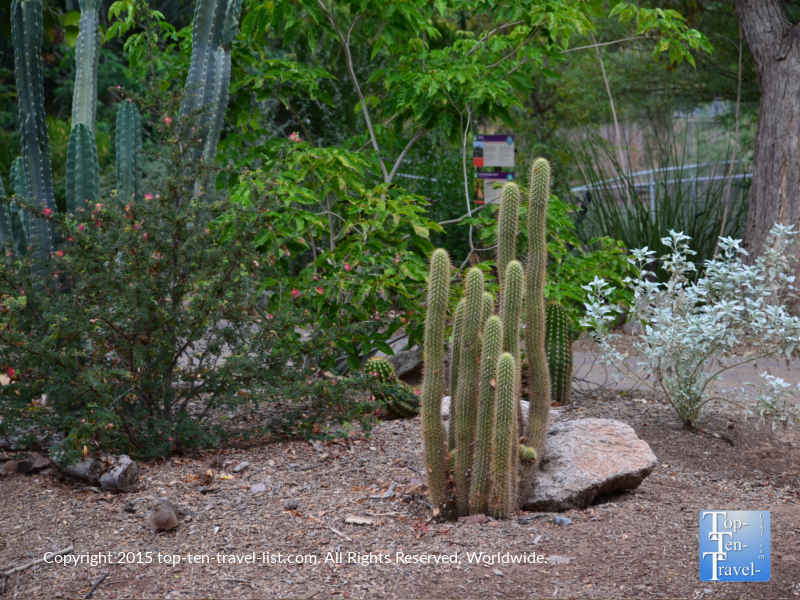 Cacti at the Phoenix Zoo