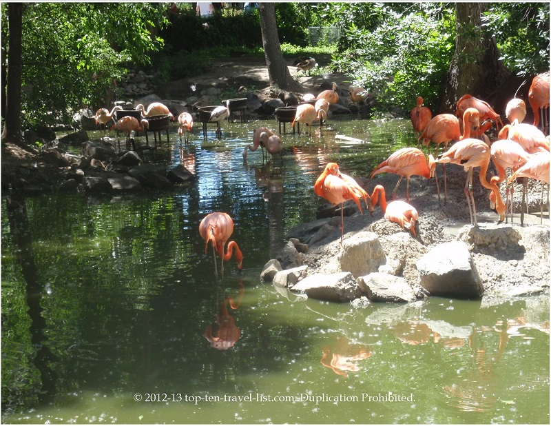 Beautiful flamingos at the Denver Zoo